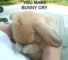 File:U make bunny cry.jpg