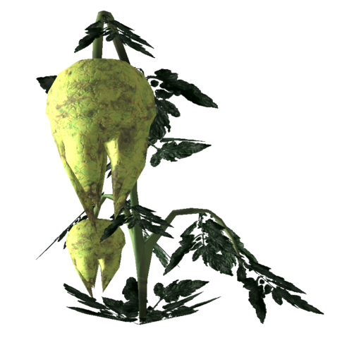 File:Punga fruit Plant.png