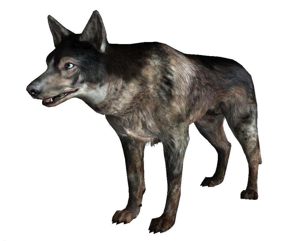 Dog Fallout New Vegas Fallout Wiki Fandom Powered