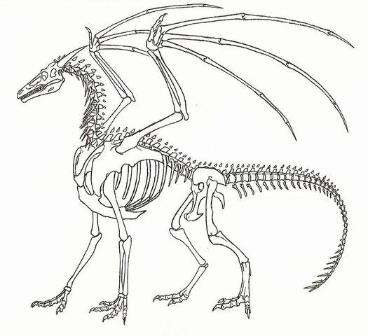 File:Dragon11.jpg