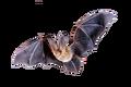 Giant Bat Fallout Origins