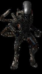 Xenomorph Isolation