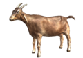 Goat Fallout Origins