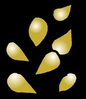 Seeds Gold