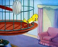 File:Canary.jpg