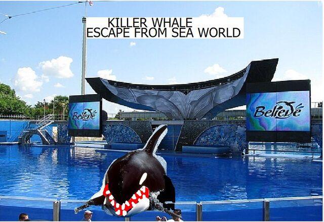 File:Killer whale poster.jpg