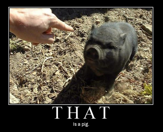 File:That Is A Pig.jpg