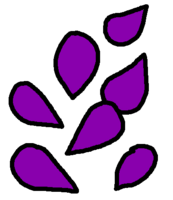 Seeds Purple