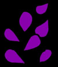 Seeds Purple