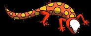 Dune Gecko