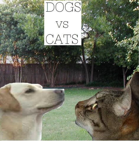 File:Dogs vs Cats.jpg