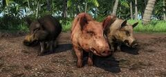 Farcry pig