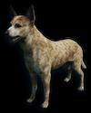 FC3 cutout dingo