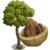 Brazil Nut Tree-icon