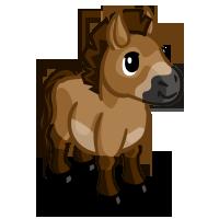 Image przewalski mini horse farmville wiki for Farmville horse