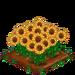 Sunflower extra100