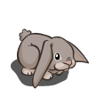 English Lop-icon