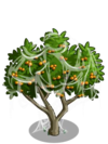 Apricot Tree4-icon
