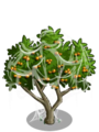 Apricot Tree4-icon.png