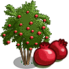 Pomegranate Tree-icon