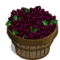 Elderberry Bushel-icon