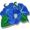 Morning Glory-icon.png