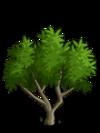 Apricot Tree1-icon