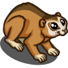 Bengal Slow Loris-icon