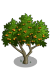 Apricot Tree2-icon