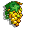 Semillon Grape-icon