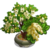 Andromeda Bonsai Tree-icon
