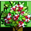 Snow Cherry-icon