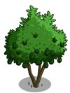 Avocado Tree2-icon