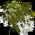 Black Locust Tree-icon