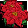 Poinsettia-icon