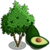 Avocado Tree-icon