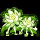 Night Cereus Crop-icon