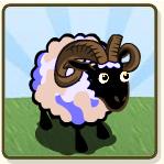 RAM 1B CC