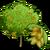 Almond Tree-icon