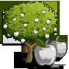 White Apple Tree-icon