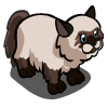 Himalayan Cat-icon
