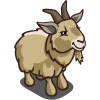 Pygmy Goat-icon