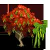 Gulmohar Tree-icon