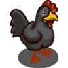 Black Chicken-icon