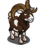 Found Mouflon Sheep