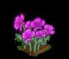Perfect Purple Poppies-icon