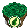 Organic Spinach Bushel-icon