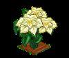 Perfect White Poinsettia-icon