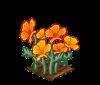 Perfect Golden Poppies-icon