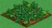 Watermelon 66